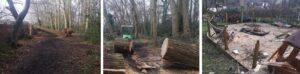 Fallen tree on fence