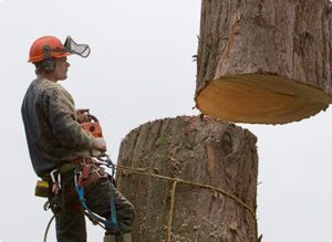 Commercial Tree Surgery