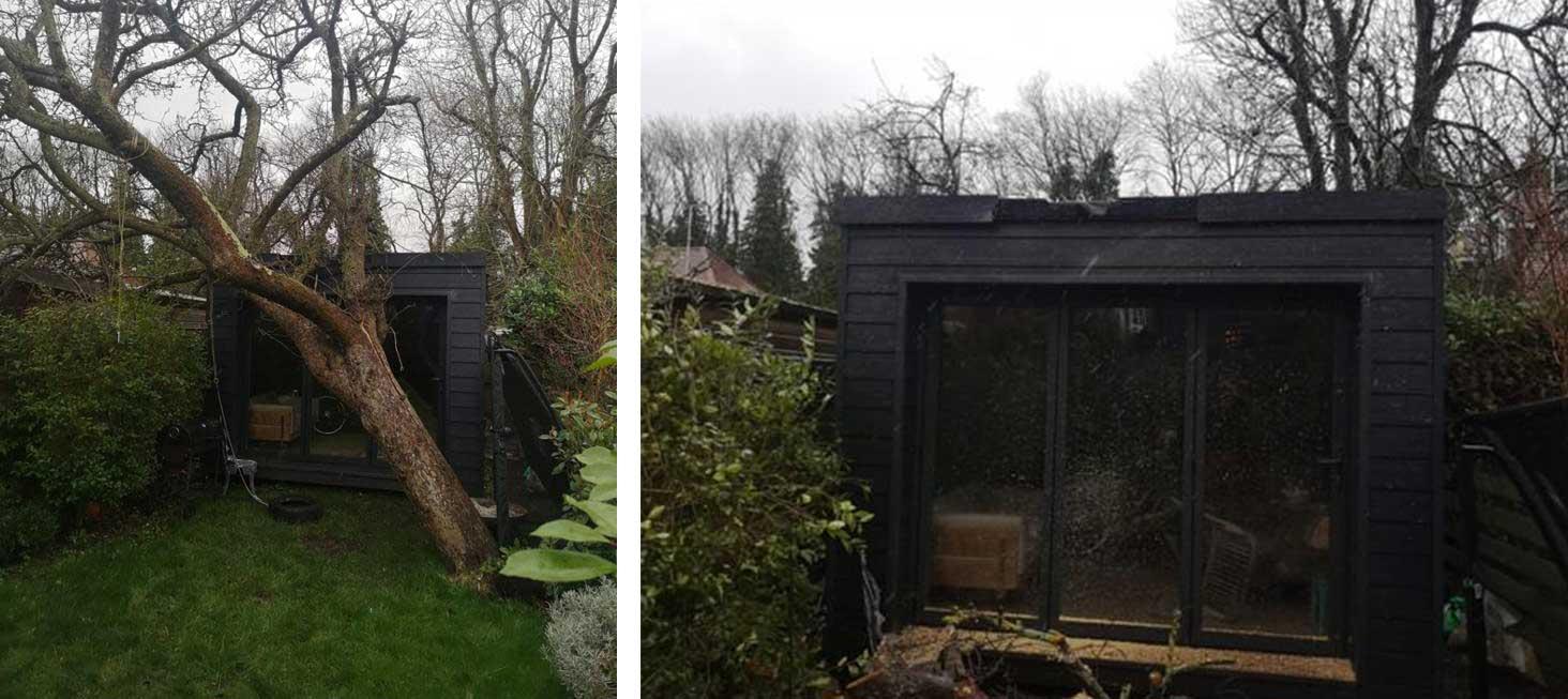 fallen tree on shed