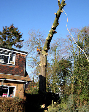 Residential Tree Surgery